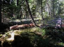 Original_Woods