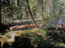 Sahara_Woods