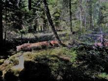 Sauna_Woods