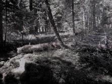 Slate_Woods