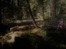 Sunscreen_Woods