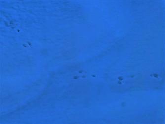 Footsteps_2