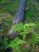 Spring Walk_Fern and Log