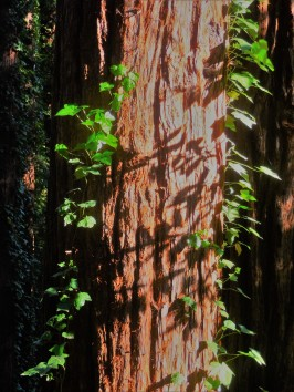 Spring Walk_Tree