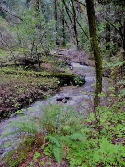 Fall Creek_Banana Slug_Vantage Point