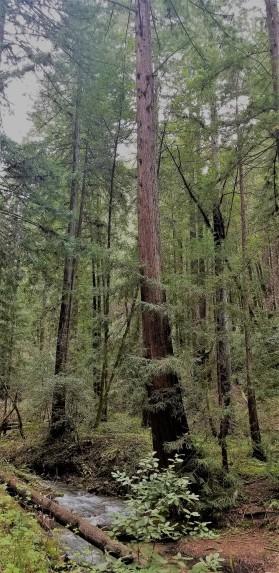 Fall Creek_Trees Yearning