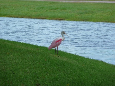 Bird Actor_Florida