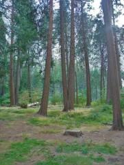 Tree Dedication_3