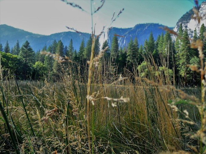 Yosemite_Meadow From Below