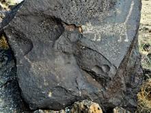 Petroglyph National Monument_Petroglyph_5