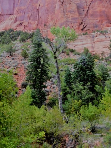 Zion_Taylor Creek Trail_Trees_1
