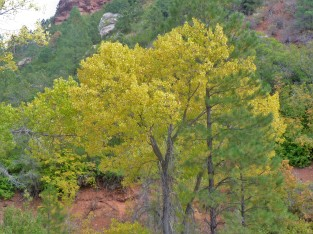 Zion_Taylor Creek Trail_Trees_2