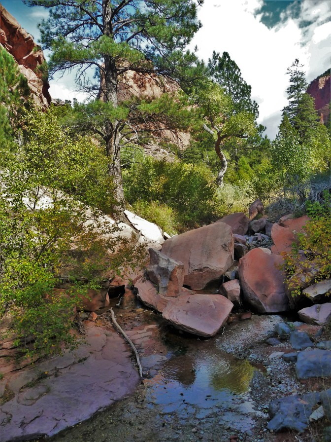 Zion_Taylor Creek Trail_Trees_Rocks_Creek