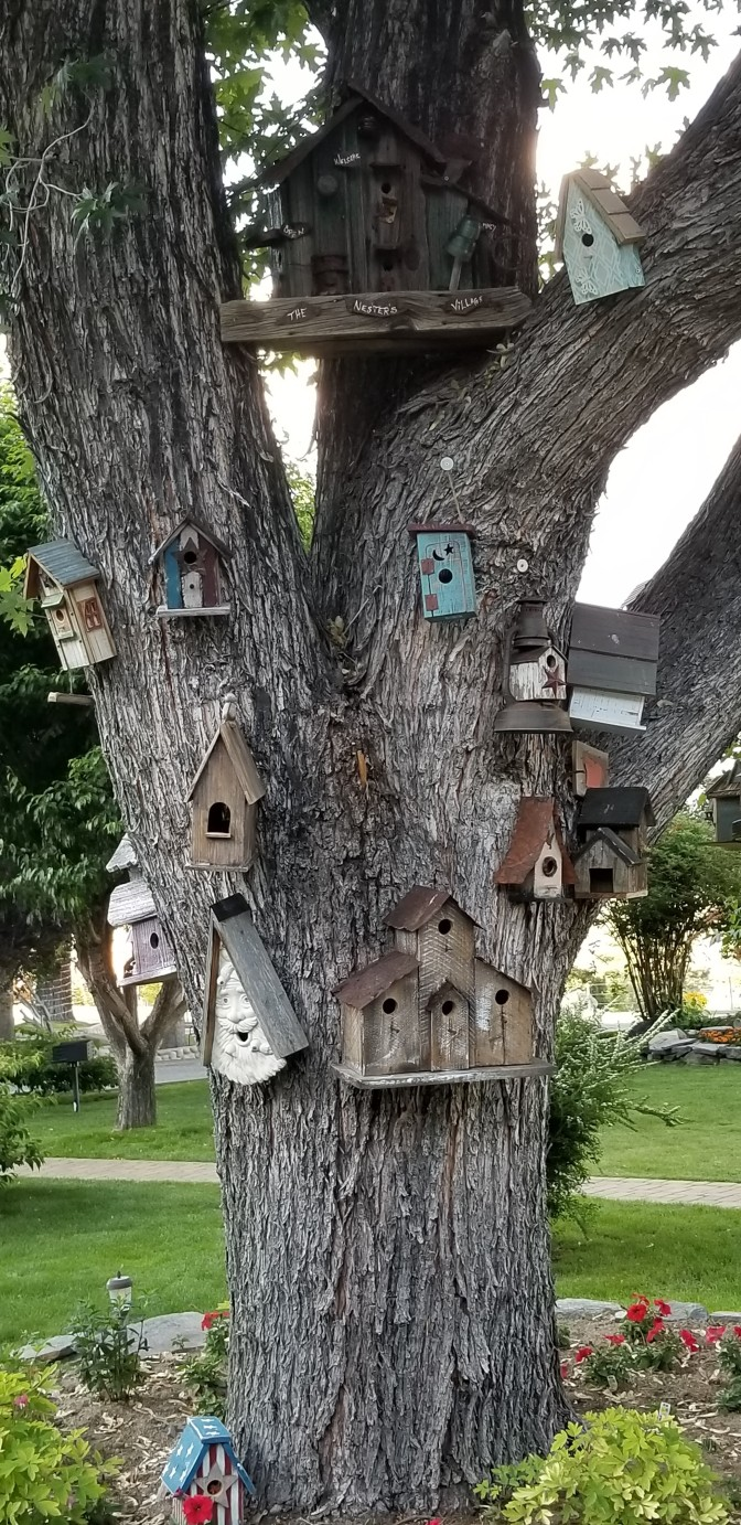 Bird Houses_The Neighborhood