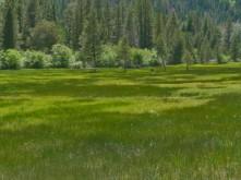 Meadow_3
