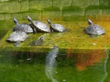 Unboxed Turtles_1