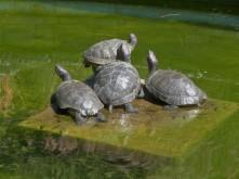 Unboxed Turtles_2