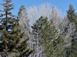 Trees Between Seasons