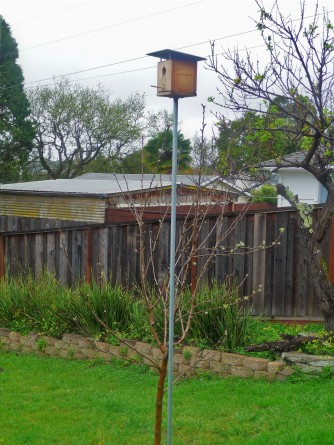 California Tree & Birdhouse