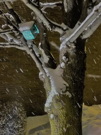 Chicago Tree & Birdhouse