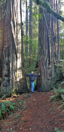 Redwood Parks_1