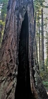 Redwood Parks_10