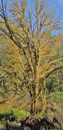Redwood Parks_3