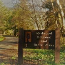 Redwood Parks_5
