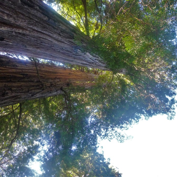 Redwood Parks_7