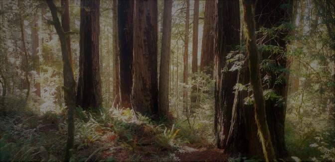 Redwood Parks_8