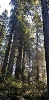 Redwood Parks_9