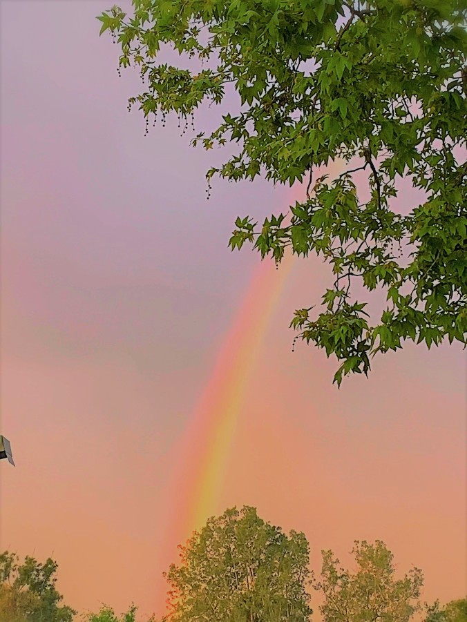 Rainbow Behind Trees