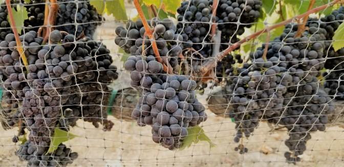 Sculpterra Winery_10