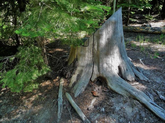 Stump_Exit_3