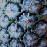 Pineapple Eyes_Blue